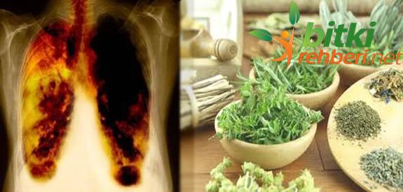 Akciğer Kanserine Bitkisel Tedavi