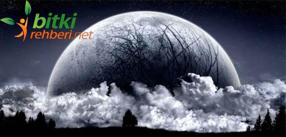 Ay'da Bitkiler Yetiştirilecek