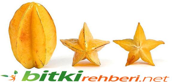 Yıldız Meyvesi