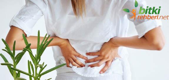 Bel fıtığı bitkisel tedavi