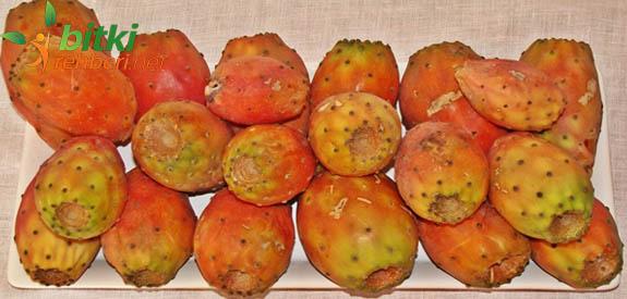 Frenk inciri Meyvesi