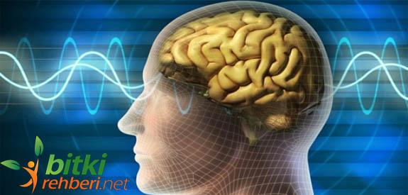 Beyin tümörü bitkisel tedavi