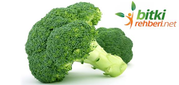 Brokoli Vücudumuzu Güçlendiriyor